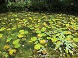 モネの池.jpg