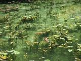 モネの池3.jpg